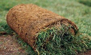 sod-turner-valley-okotoks-calgary-high-river-millarville