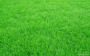 grass-cutting-lawn-mowing-okotoks-calgary-turner-valley2