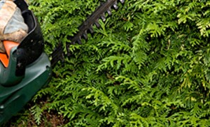 hedge-trimming-okotoks-hedge-trimming-calgary